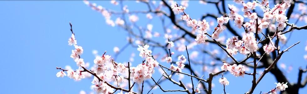 4月の見どころは桜
